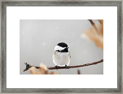 Framed Print featuring the photograph Chickadee Bird In Snow by Christina Rollo