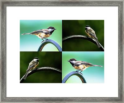 Framed Print featuring the photograph Chickadee Duo Composite by Onyonet  Photo Studios