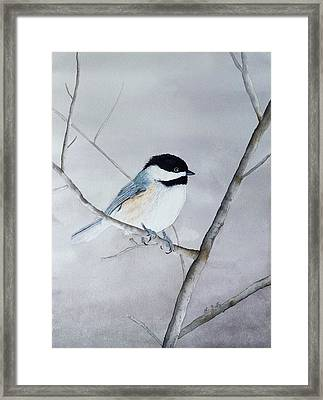 Chickadee II Framed Print