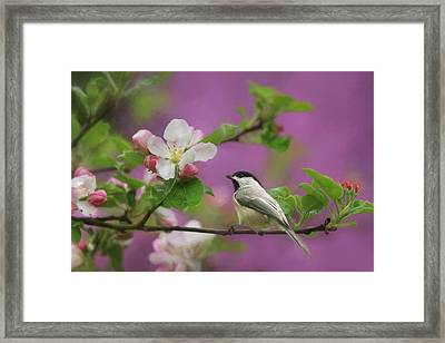 Chickadee In Blossoms Framed Print by Lori Deiter
