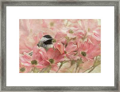 Framed Print featuring the photograph Chickadee In The Dogwood by Angie Vogel