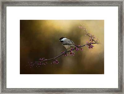Chickadee In The Golden Light Framed Print