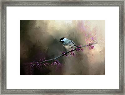 Chickadee In The Light Framed Print