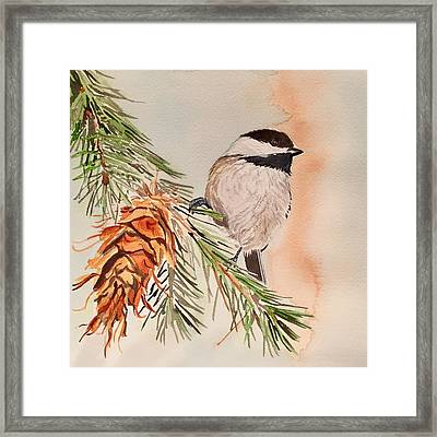 Chickadee In The Pine Framed Print