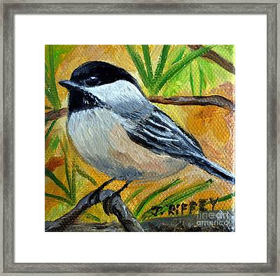 Chickadee In The Pines - Birds Framed Print