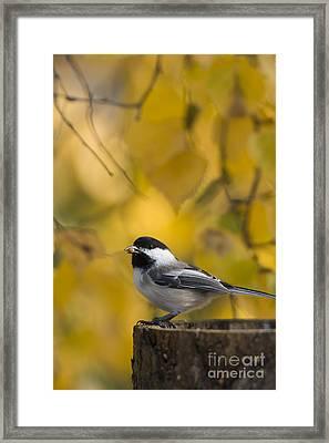Chickadee On A Log Framed Print by Tim Grams