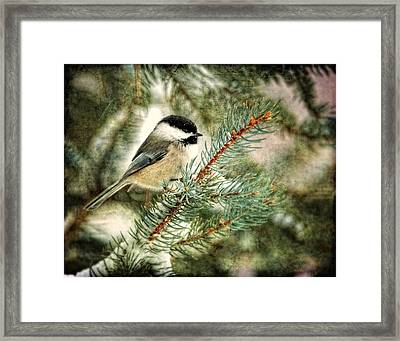 Chickadee On A Snowy Tree Framed Print