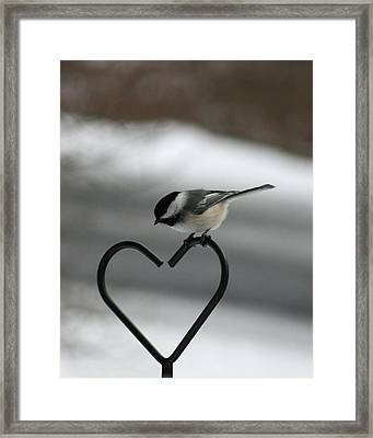 Chickadee On Heart Framed Print by George Jones