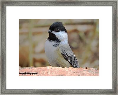 Chickadee's Winter Reverie Framed Print