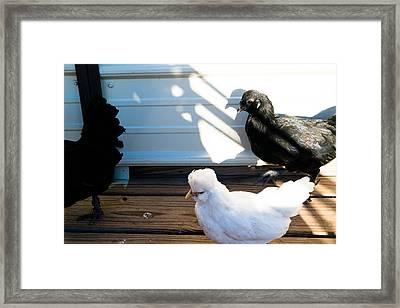 Chicken 1 Framed Print by Wattie Wildcat