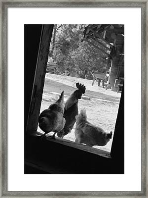 Chicken Framed Print by Dan Andersson