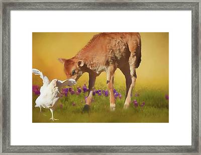 Chicken Little Framed Print by Donna Kennedy