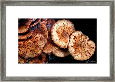 Chicken Of The Woods Framed Print