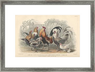 Chickens Framed Print by Dreyer Wildlife Print Collections