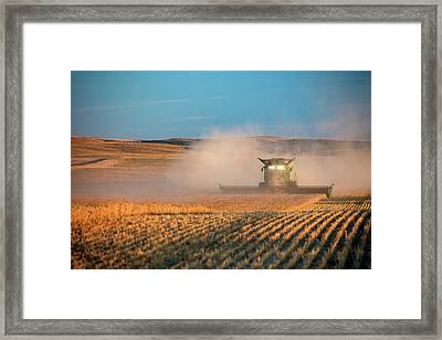 Chickpea Farm Framed Print by Todd Klassy