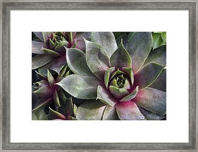 Chicks And Hens Framed Print by Ann Bridges