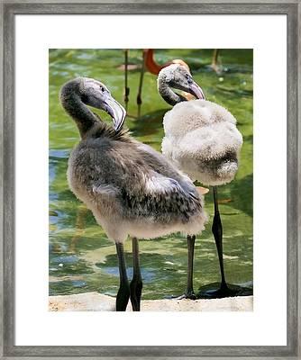 Chicks Hangin' Out Framed Print