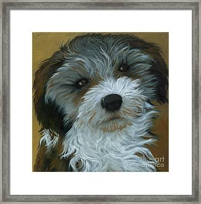 Chico - Dog Portrait Oil Painting Framed Print by Linda Apple