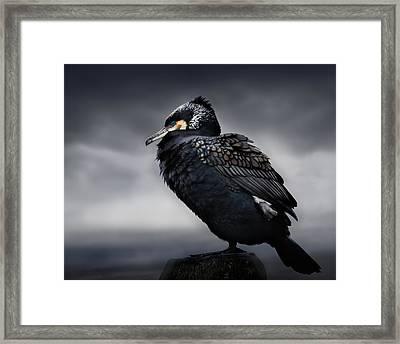 Chief Framed Print by Martin Eilertsen