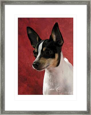 Chihuahua 218 Framed Print by Larry Matthews