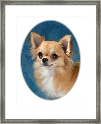 Chihuahua 966 Framed Print by Larry Matthews