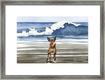 Chihuahua At The Beach Framed Print by David Rogers