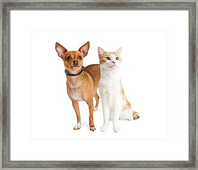 Chihuahua Dog And Orange And White Cat Together Framed Print