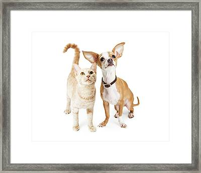 Chihuahua Dog And Young Orange Tabby Cat Framed Print
