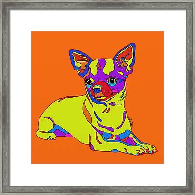 Chihuahua Love Framed Print by Patti Siehien