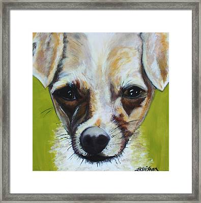 Framed Print featuring the painting Chihuahua Mix- Roxie by Laura  Grisham