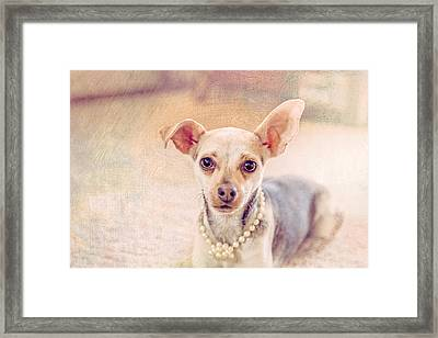 Chihuahua Pet Portrait Framed Print by Debi Bishop