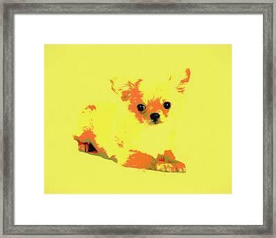 Chihuahua Pop Art Framed Print