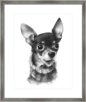 Chihuahua Pup Framed Print by Natasha Denger