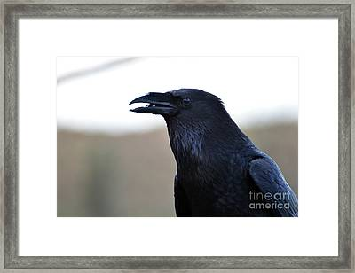 Chihuahua Raven Profile Framed Print