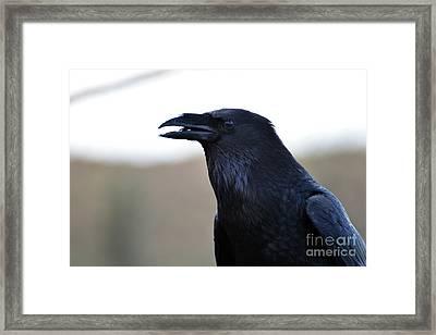 Chihuahua Raven Profile Framed Print