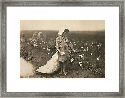 Child Labor, A Young Girl Picking Framed Print