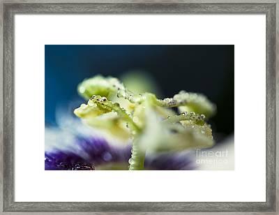 Child Of Nature Framed Print