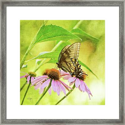Child Of Sun And Summer Framed Print by Lois Bryan