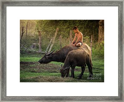 Framed Print featuring the photograph Child Riding Buffalo In Countryside Thailand. by Tosporn Preede