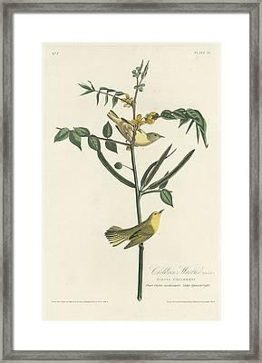 Children's Warbler Framed Print