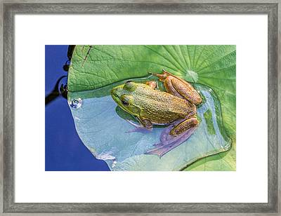 Chillin At The Shallow End Framed Print