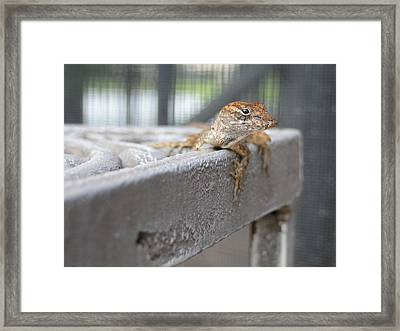 Chillin' Framed Print by Gail Butters Cohen