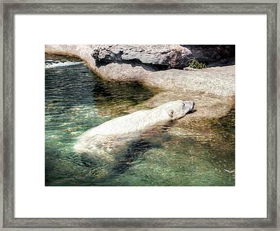 Framed Print featuring the photograph Chillin' Polar Bear by Pennie  McCracken