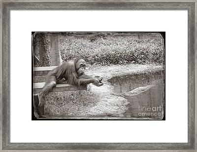 Framed Print featuring the photograph Chillin by Sandy Adams