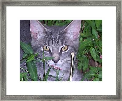 Chilling In The Garden Framed Print by Martha Hoskins