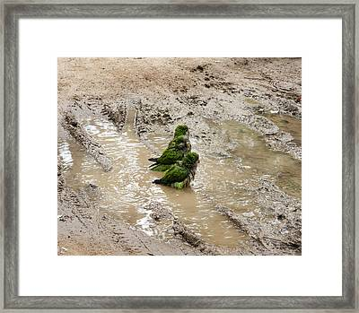 Chilling Out Framed Print