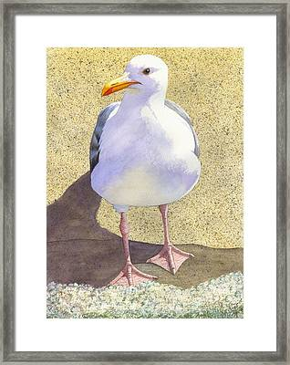 Chilly Framed Print by Catherine G McElroy
