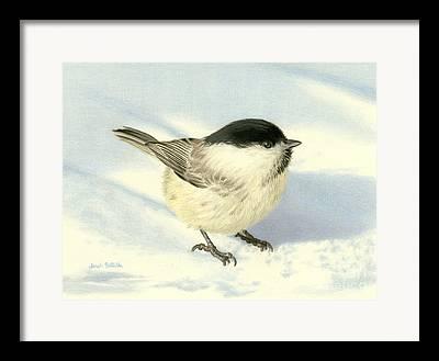 Bird Watcher Framed Prints
