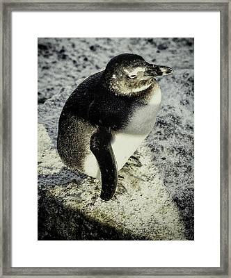Chillypenguin Framed Print