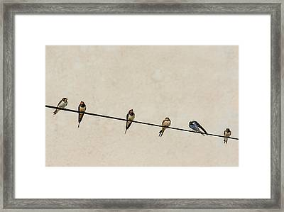 Chimney Swallows On Wire Framed Print